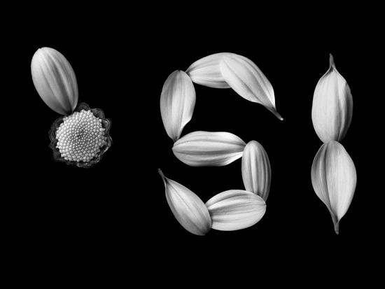 Resultado de imagen de petalos de margarita
